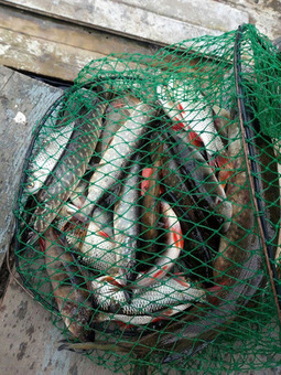 Рыбалка на www.озероглубокое.рф